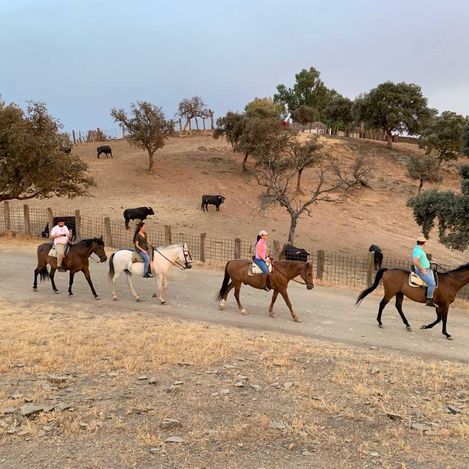 actividades jaen vilches rutas caballo 04