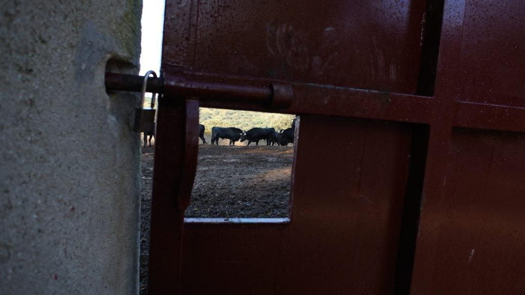 El Añadio Turismo taurino rural